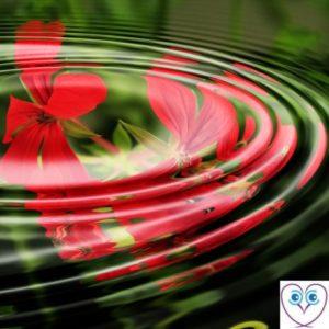 Flower in whirlpool